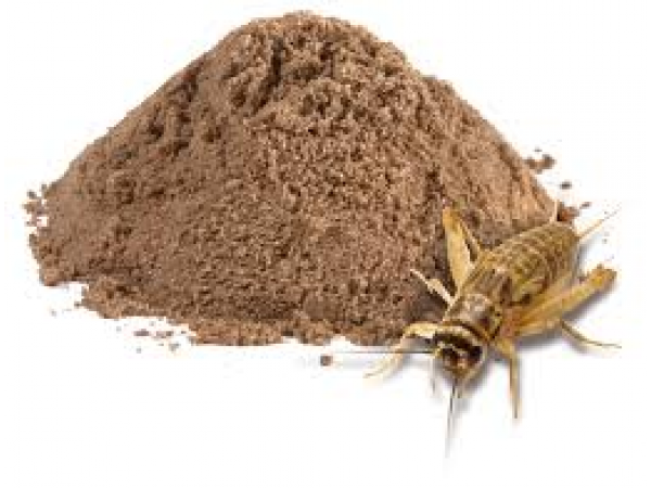 2019 Food Trends: Cricket Powder, Edible Insect Start-ups Spark Love For Bugs
